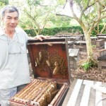 Các phương pháp bổ sung thức ăn cho ong