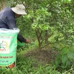 Cách bón phân hiệu quả cho cây ăn trái