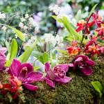 Cách làm cho Lan rừng ra hoa