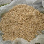 Cách ngâm ủ hạt giống thóc lúa