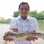 Cách nuôi cá Lóc bông - cach nuoi ca loc bong 150x150