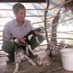 Cách phòng trị bệnh viêm phổi ở Dê, Cừu