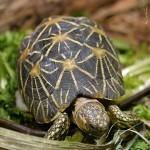 Cách phòng và trị bệnh cho Rùa