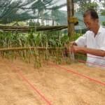 Chọn giá thể trồng Lan Mokara - chon gia the trong lan mokara 150x150