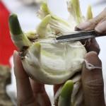 Cách gọt tỉa củ Thủy Tiên để hoa nở đúng Tết