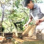 Kháng sinh mới trị bệnh nhiễm khuẩn ở Ong - khang sinh moi tri benh nhiem khuan o ong 150x150
