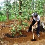 Bón phân cho cây đúng cách