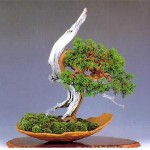 Kĩ thuật lão hóa Bonsai - ki thuat lao hoa bonsai 150x150