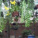 Kĩ thuật nhân giống Phong Lan - ki thuat nhan giong phong lan 1 150x150