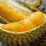Kinh nghiệm trồng sầu riêng Monthoong