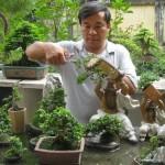 Kỹ thuật cắt tỉa chiết cành Bonsai - ky thuat cat tia chiet canh bonsai dung cach 150x150