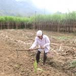 Kỹ thuật làm đất trồng Mía