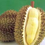 Kỹ thuật trồng sầu riêng cơm vàng hạt lép