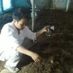 Mô hình Bò - giun - lươn - mo hinh bo giun luon 150x150