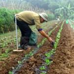 Phương pháp bón phân cho rau an toàn - phuong phap bon phan cho rau an toan 150x150