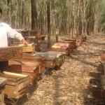 Phương pháp lấy sữa và mật Ong