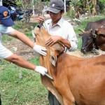 Phương pháp phòng bệnh cho Bò