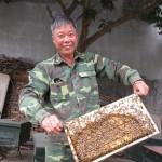 Nuôi ong mật Ý - 09 20 08 img 0902 150x150