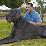 10 lý do bạn nên nhận nuôi một chú Chó già