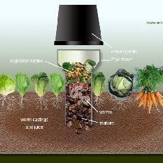 Dùng rác nhà bếp để trồng rau - 148680 featured