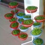Lưu ý khi trồng rau mầm tại nhà