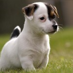 Cách chăm sóc Chó con - cach cham soc cho con 150x150