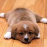 Cách chăm sóc khi cún nôn mửa