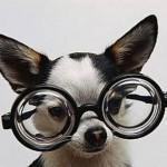 Cách chăm sóc mắt cho Chó - cach cham soc mat cho cho 150x150