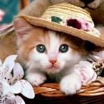 Cách chăm sóc Mèo con - P1 - cach cham soc meo con p1 150x150