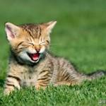 Cách chăm sóc Mèo con - P2 - cach cham soc meo con p2 150x150