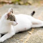 Cách chăm sóc Mèo mang thai - cach cham soc meo mang thai 150x150