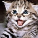 Cách trị bệnh điếc ở Mèo - cach tri benh diec o meo 150x150