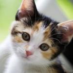 Cách trị bệnh táo bón ở Mèo - cach tri benh tao bon o meo 150x150