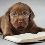 Cách trị rối loạn nhận thức ở Chó già