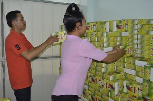 Trồng Hồng hoa dược liệu quý giúp thoát nghèo - images1153205 1437364517 hong hoa 500x332