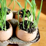 6 lợi ích tuyệt vời của mầm lúa mạch - jpg77 150x150