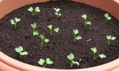 Cách để hạt giống nhanh nẩy mầm - jpg81 500x300