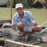 Kĩ thuật nuôi cá lăng nha trong lồng bè - ki thuat nuoi ca lang nha trong long be 150x150