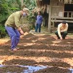Kỹ thuật nuôi Giun đất (Trùn đất) - ky thuat nuoi giun dat trun dat 150x150