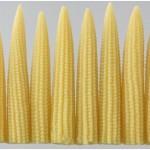 Kỹ thuật trồng bắp ( ngô ) thu trái non - ky thuat trong bap ngo thu trai non 150x150