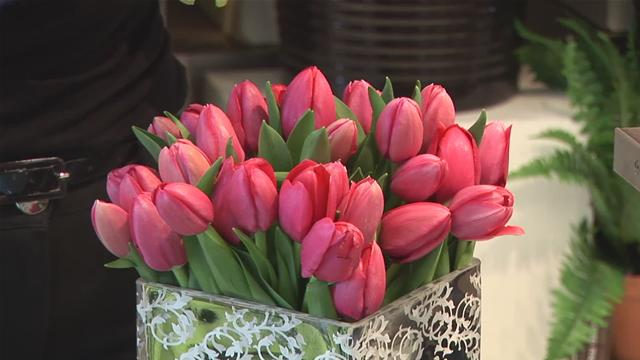 Kỹ thuật trồng hoa Tulip trong chậu - ky thuat trong hoa tulip 2911 7