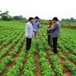 Kỹ thuật trồng và chăm sóc lạc đông