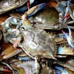 Mô hình nuôi cua xanh bằng giống nhân tạo - mo hinh nuoi cua xanh bang giong nhan tao2 150x150
