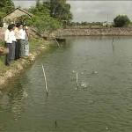 Những lưu ý khi nuôi cá rô đồng - nhung luu y khi nuoi ca ro dong 150x150