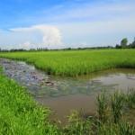 Nuôi lươn trong ruộng lúa