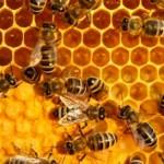 Phương pháp tạo ong chúa