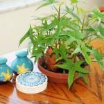 Cách trồng khoai lang ngay tại nhà