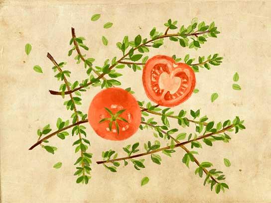 Cách đơn giản để cà chua, dưa chuột lớn nhanh hơn - 1440061496 01 thymetomato fsl
