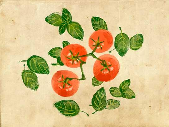 Cách đơn giản để cà chua, dưa chuột lớn nhanh hơn - 1440061496 basiltomato fsl