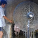 Cách phòng, chống dịch bệnh gia súc, gia cầm mùa nóng